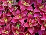 Мир растений и цветов