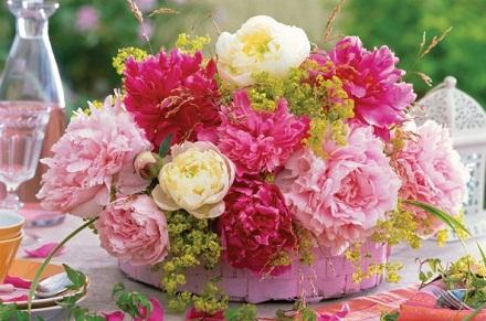 цветок пион картинка: