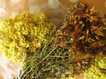 лечебные травы от глистов