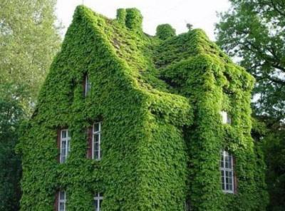 Зелёные друзья в вашем доме
