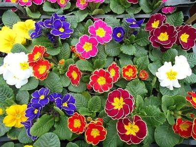 Купить цветы в ростове оптом.