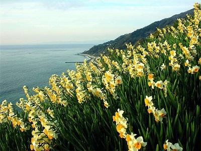 Весенние цветы. Нарцисс